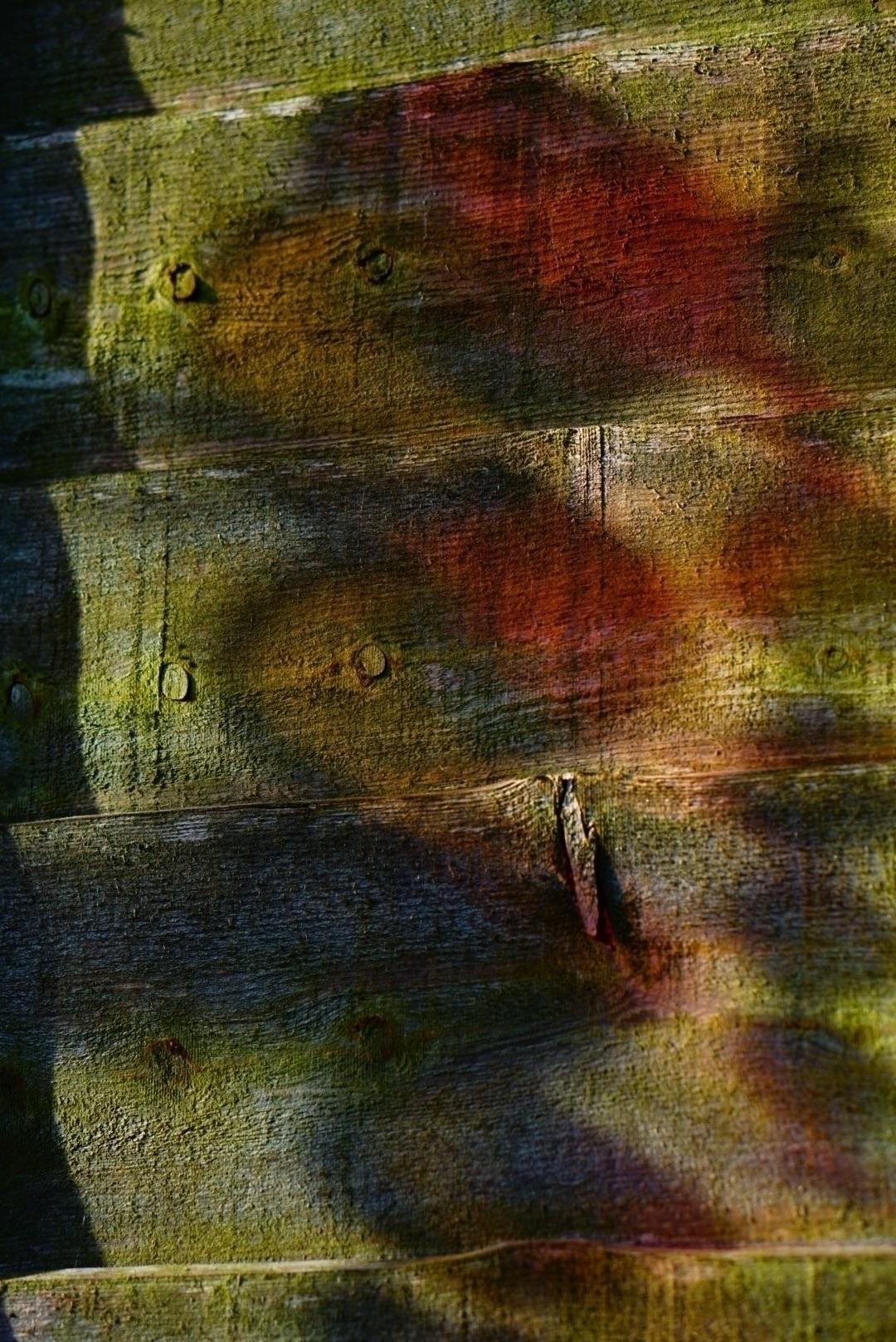Painting fence colour. summer 2 - greyswan   ello