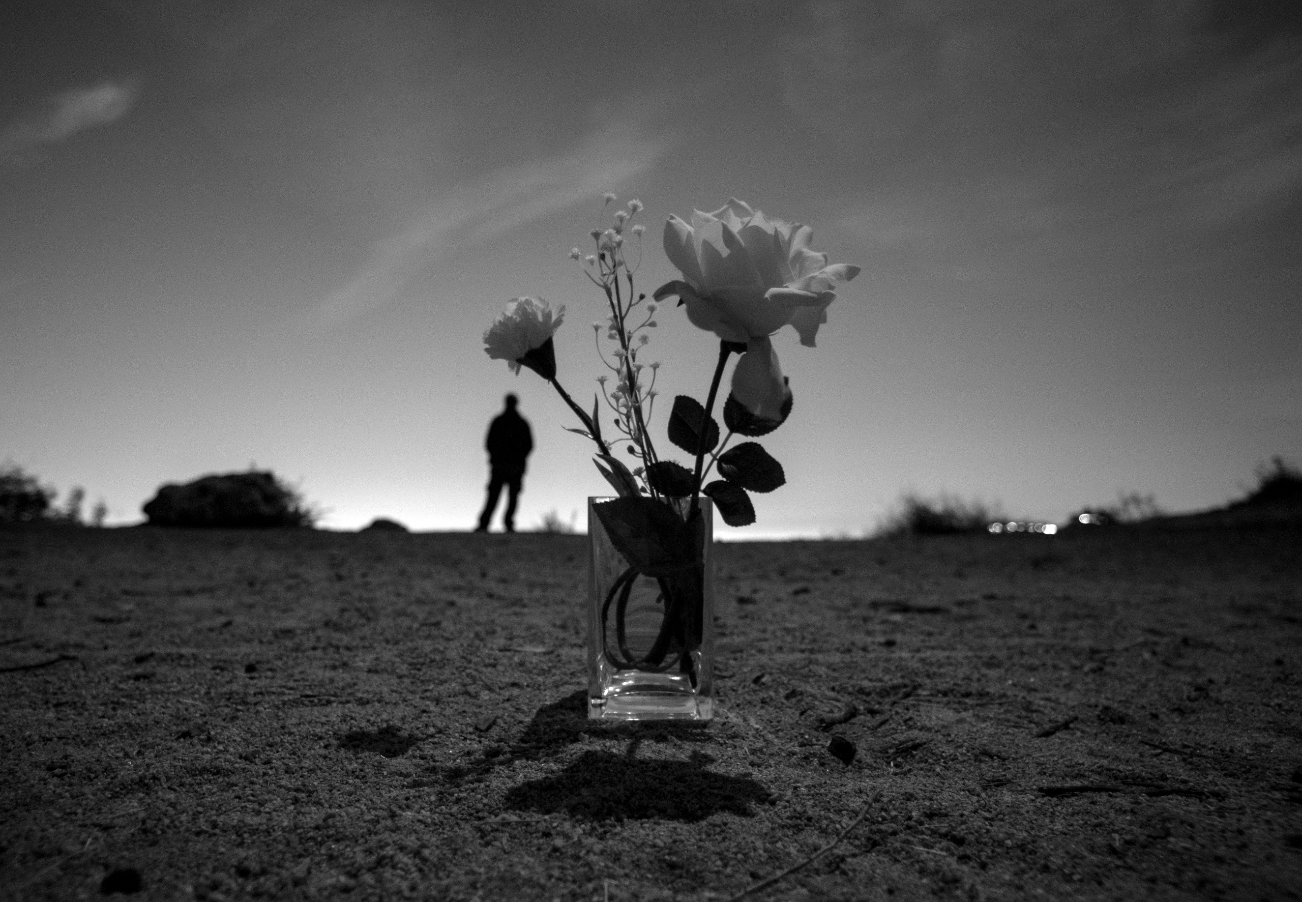 Fake Flowers Vase Empty Field,  - talyo | ello