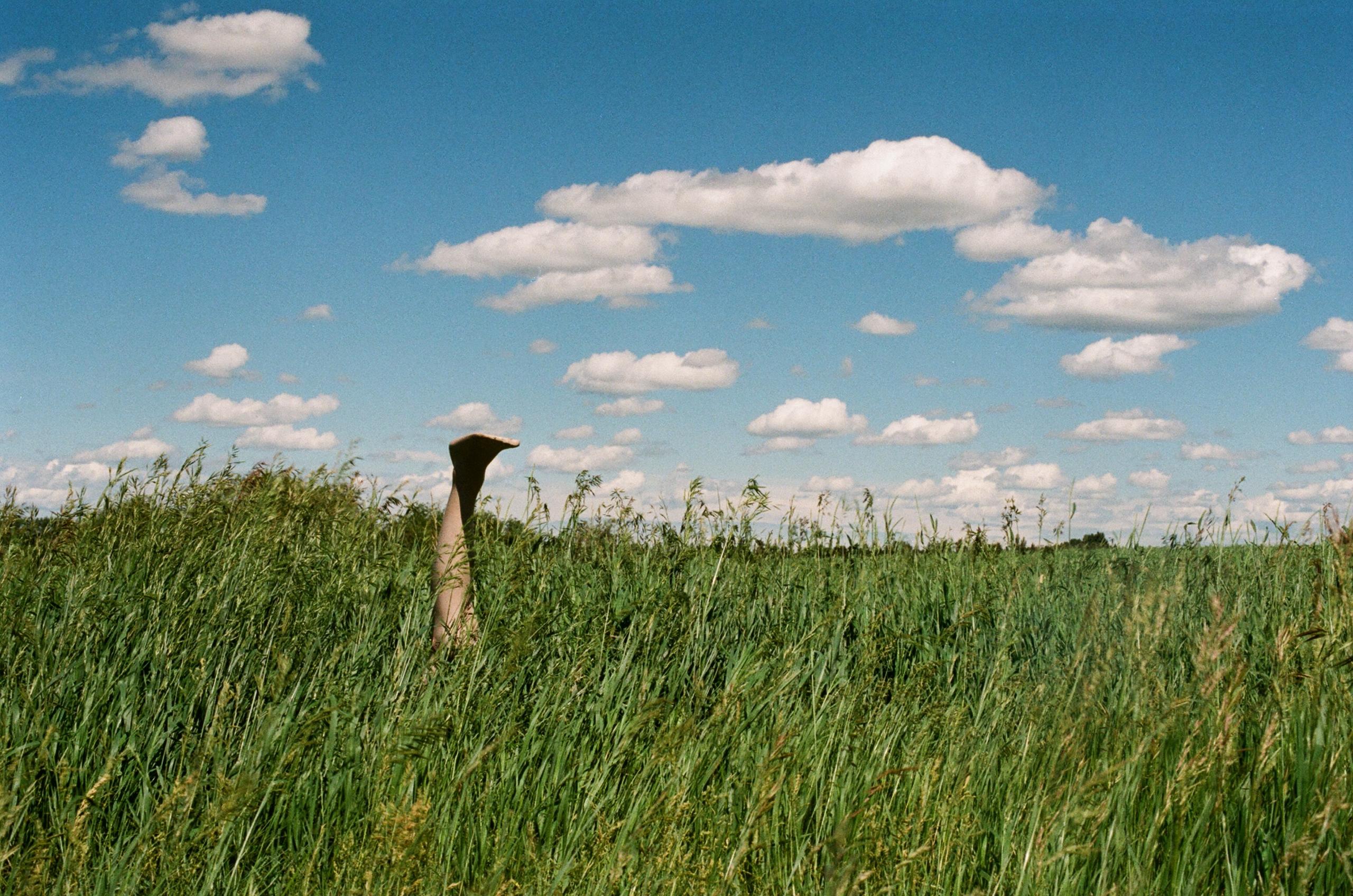 Feet sky - film, filmphotography - alaskapalms   ello