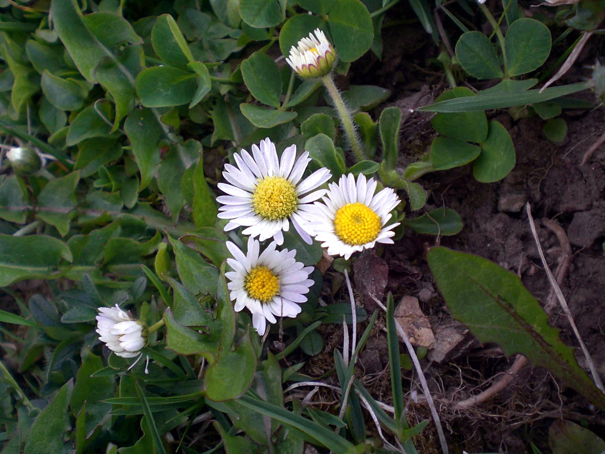 young flower forest misundersta - fondator | ello