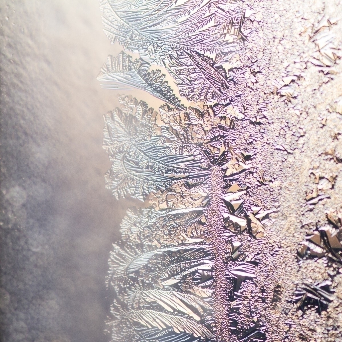 Morning light frost Canon 7D, T - katherinemossop | ello
