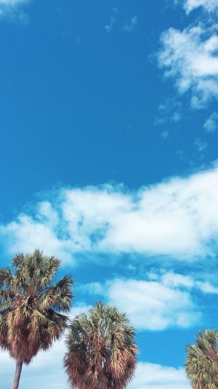 Palm | Cloud xsvmsingx - Minimal - sefjo | ello