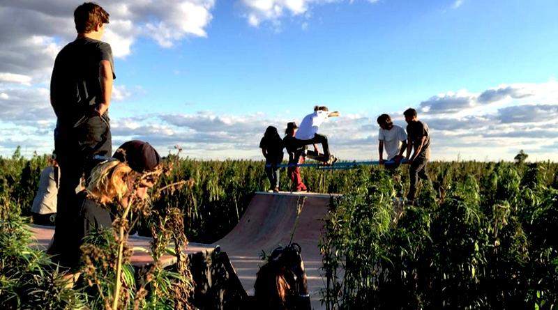 Skateboarding Weed: Life - skate - ministryofcannabis | ello