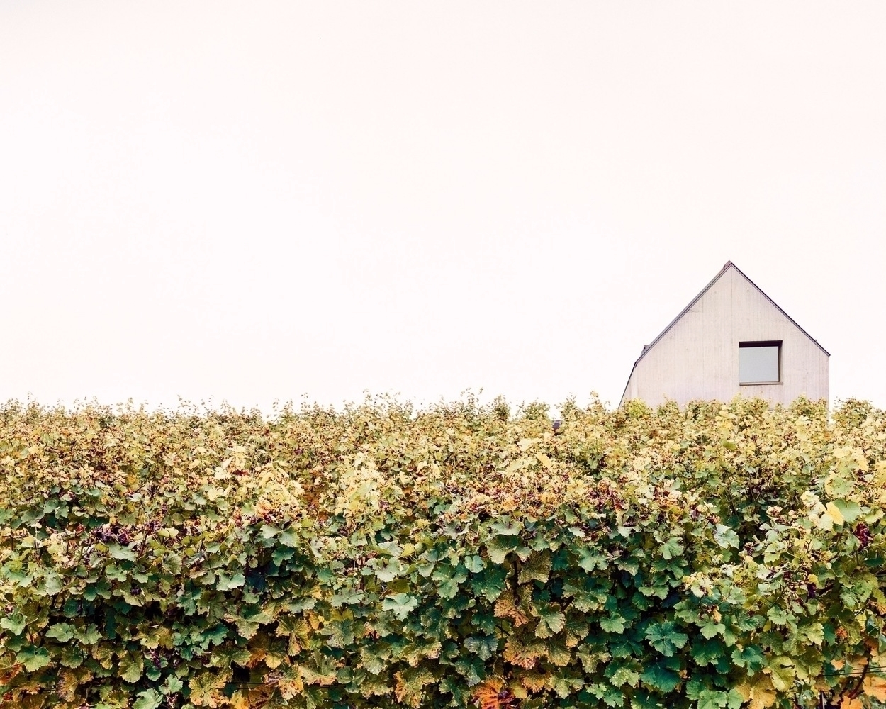House Atelier Ulrike Tinnacher - thetreemag | ello