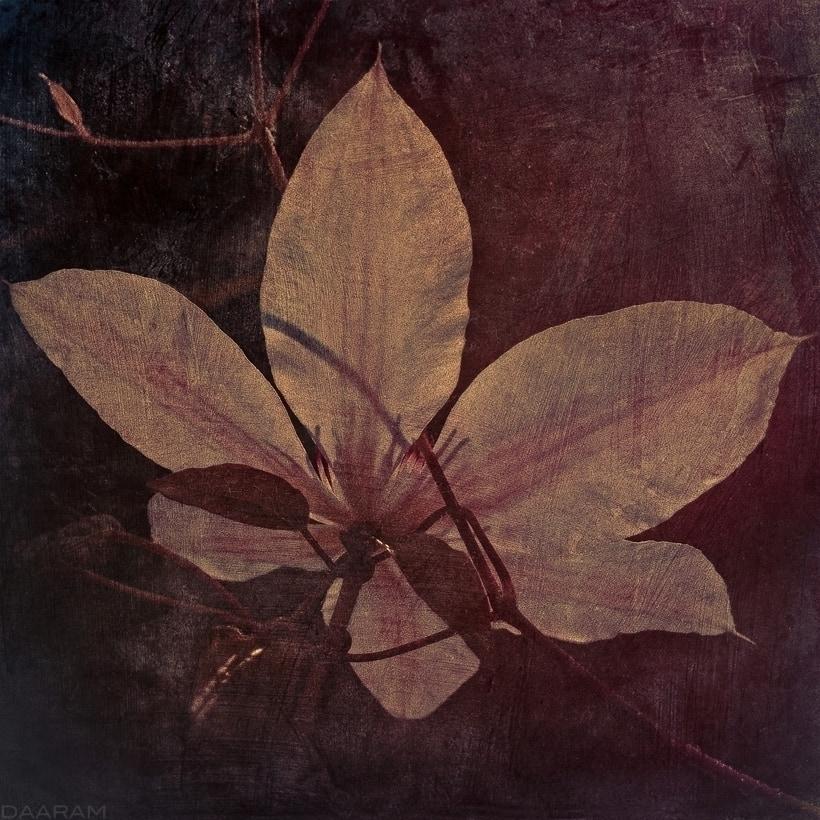 Polish Garden: Study Flower. So - daaram | ello