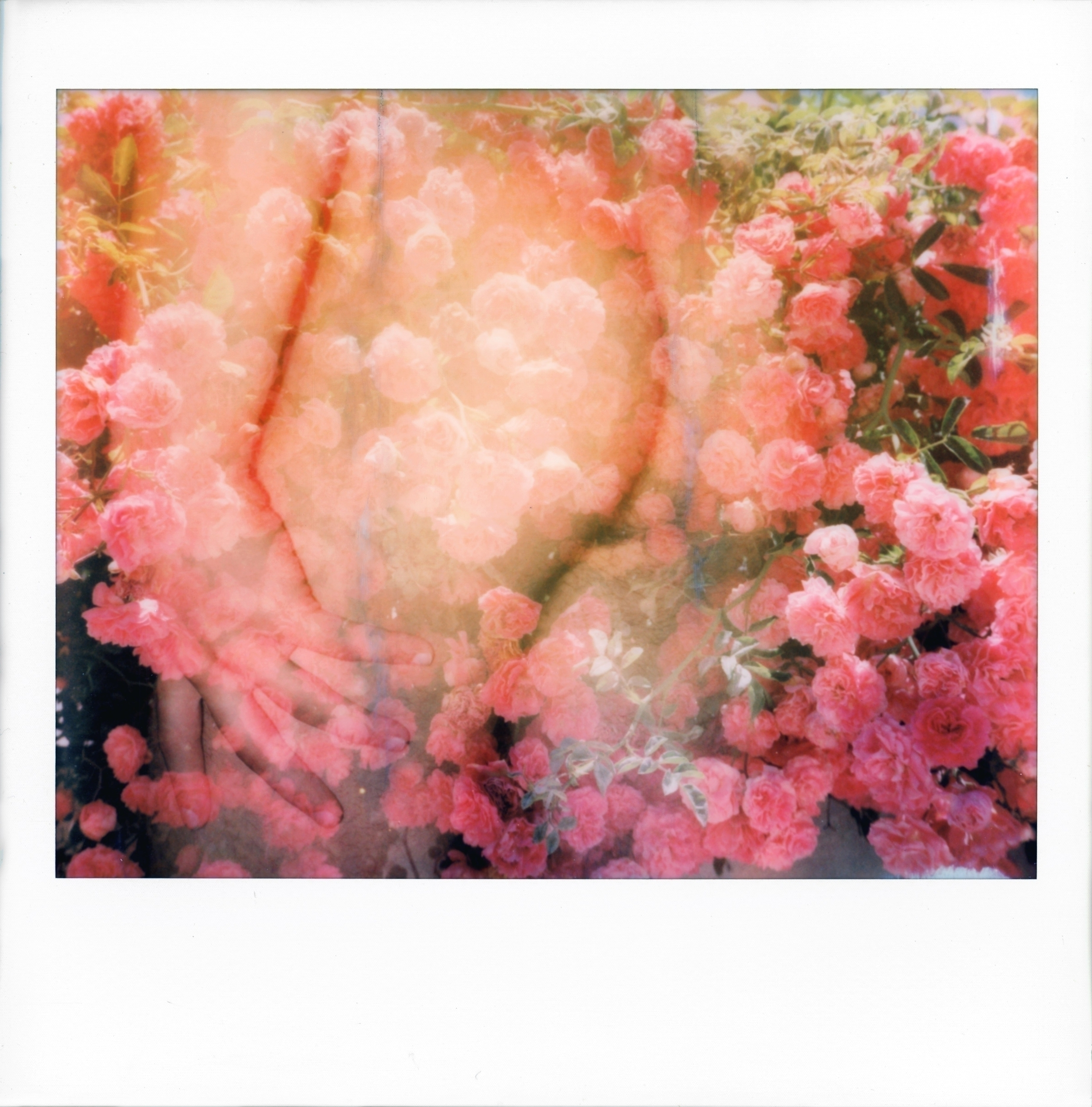 BOTTOM FLOWERS Polaroid Spectra - simoesimao | ello