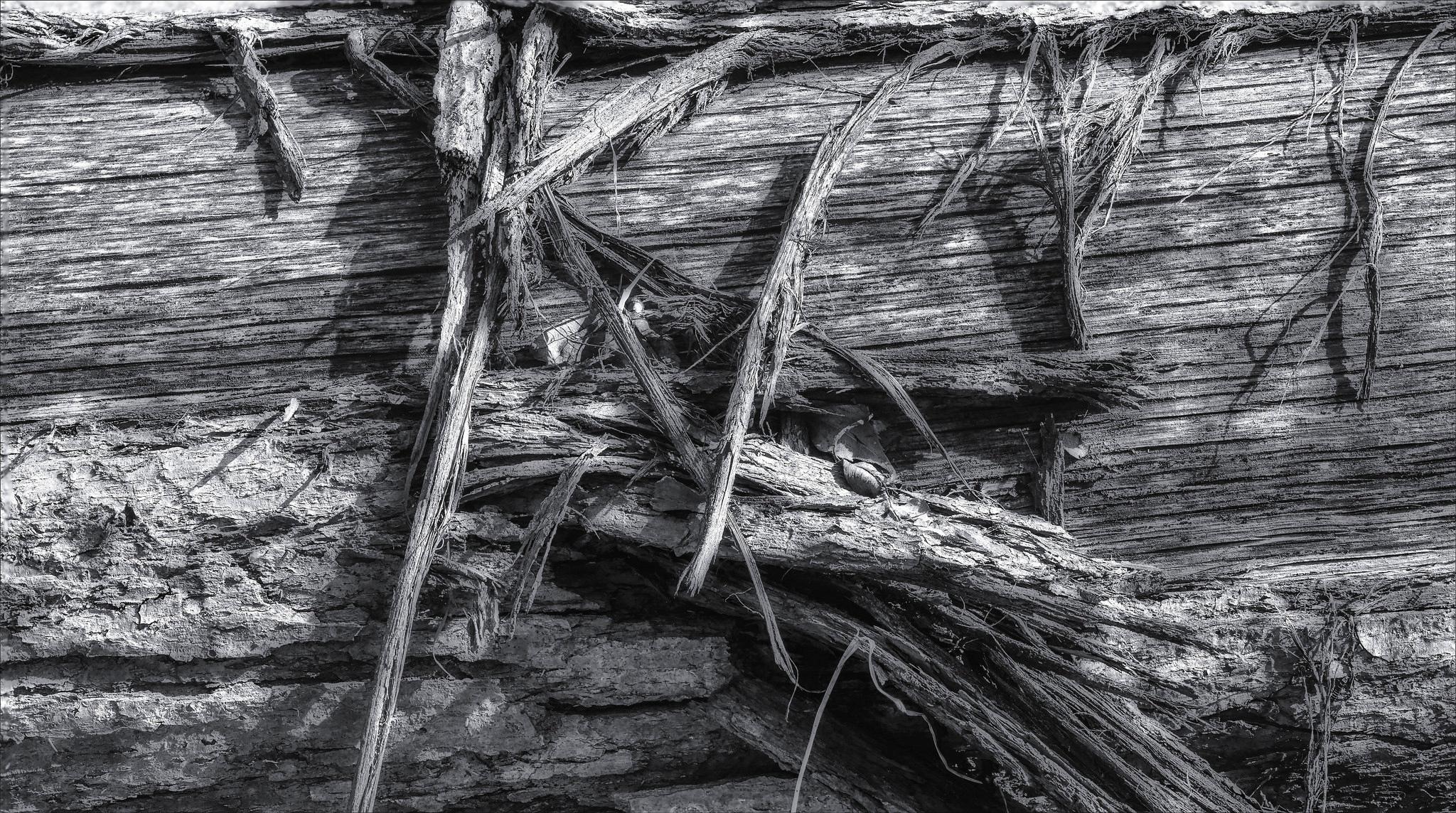 peeling bark decaying log  - monochrome - docdenny | ello