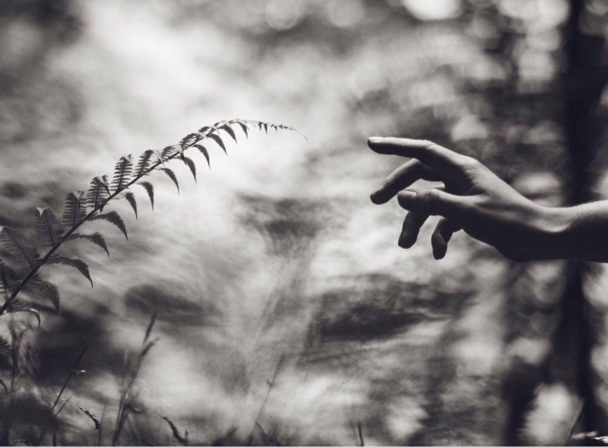 botany desire... Artistic photo - roddiemac | ello