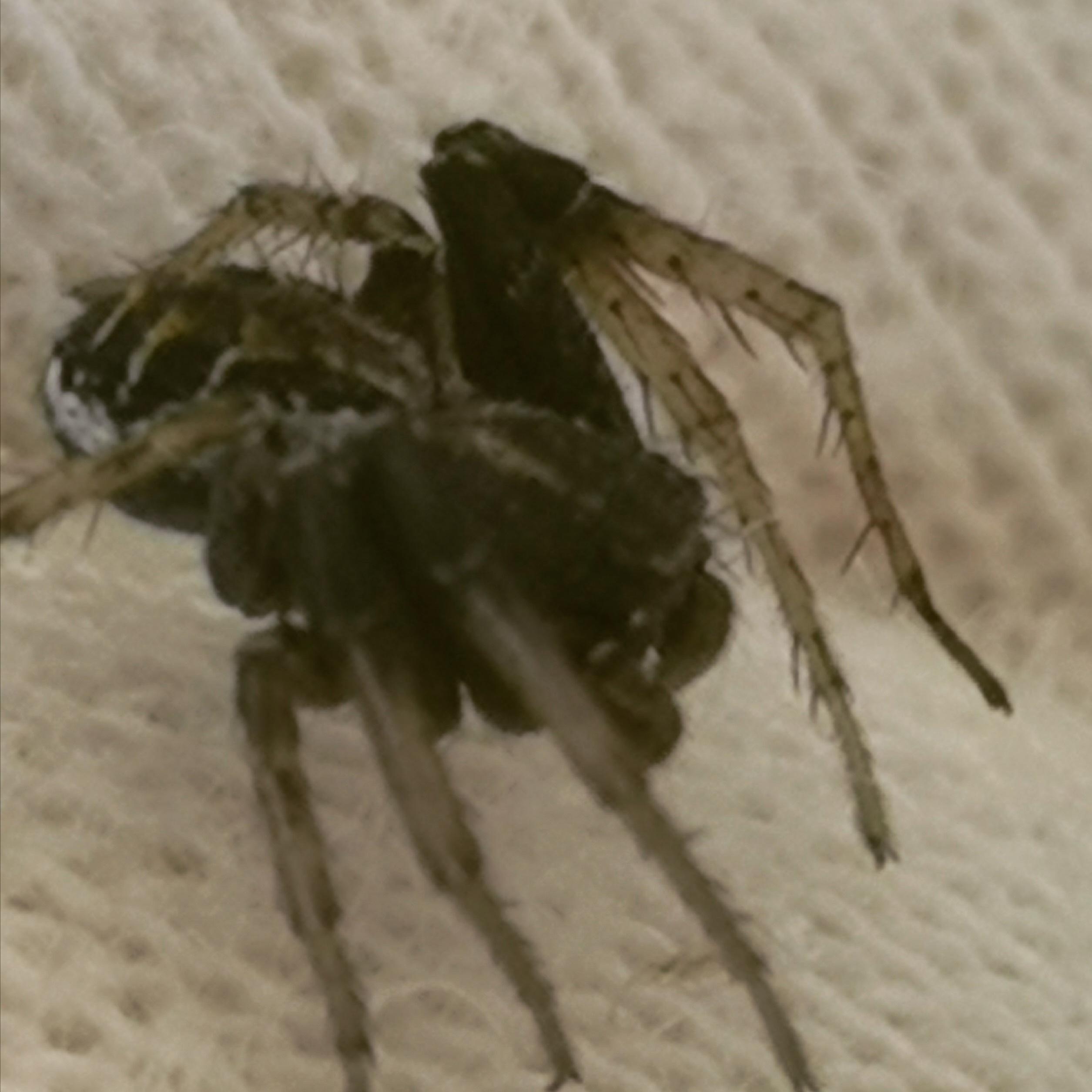 Darktronics Battle Spider Exper - thedailywealthyaffiliate   ello
